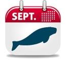 Où plonger en Septembre ?